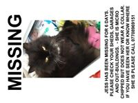 Missing Cat - Mattishall - CHECK GARAGES/SHEDS AND OUTBUILDINGS