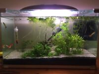 Complete Planted Arcadia 60L Tropical Freshwater Set-up With Accessories