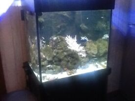 Aqua one aqua reef 195ltr marine central weir fish tank, cabinet and sump.