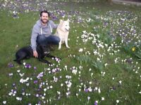 Experienced Dog walker / Trainer and Sitter in N/NW/C London - Excellence Guaranteed!