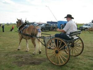 Easy entry haflinger cart