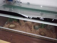 Corn snake for sale along with tank and all accessories