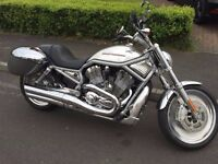 Harley V Rod - Low Milage, FSH, Great BIke