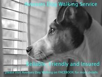 Avenues Dog Walking