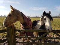 To Rent: Field & Barn with Stables