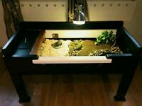 Horsefield Russian Tortoise AND LUXURY TABLE HOMES - Hermanns Redfoot