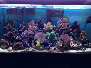 Wanted saltwater liverock/livesand and extras