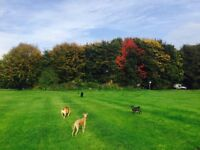 Professional, reliable and experineced dog walking and pet services in south Manchester