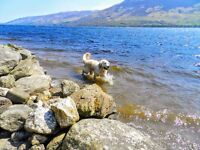 10-17th June, dog friendly holiday cottage Loch Earn with free fishing, boules and fun putting -