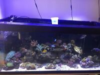 Full 4 foot marine set up for sale please see pic for list
