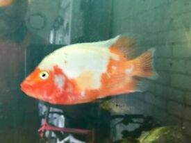 Variety of fish
