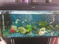 3ft tropical fishtank