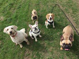 Raise The Woof - Professional Dog Walking