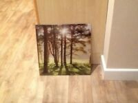 Meadow Shadows Picture in Glass by Mike Shepherd