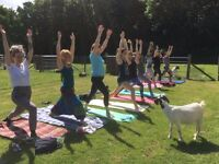 Goat Yoga comes to Suffolk