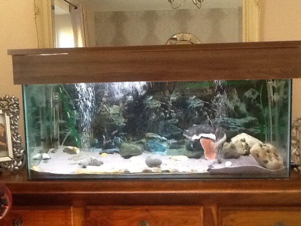 Three foot fish tank for sale .