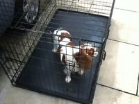 DOG CAGE FOR LARGE DOGS SPRINGIER TYPE
