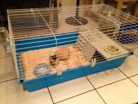 Guinea pig small anima hutch/ cage