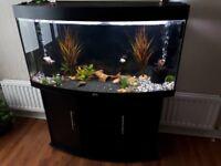 260 Curved Juwel Aquarium