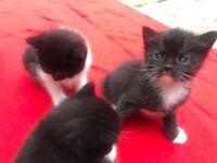 Kittens 9 weeks