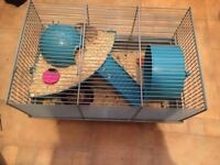 Two male dwarf hamsters for sale.