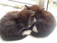 Adorable kittens