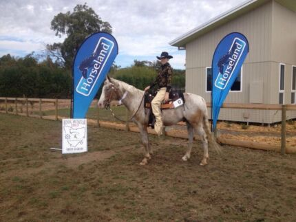 Appaloosa gelding top all rounder  Riana Central Coast Preview