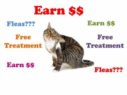 Does your CAT have FLEAS? Earn $$$ TROPICAL CAT CLINIC North Ward Townsville City Preview
