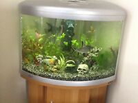 Ufo 550 corner Fish tank and fish for sale perfect working order and is currently set up. With stand