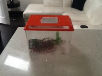 Fish tank to clear £5