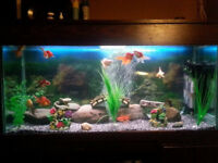 Large Clearseal Fish Tank/Aquarium & Cabinet with Full Set-up £80