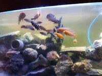 Juwel Vision 450 Aquarium and Fluval Fx5 Filter with or without fishes
