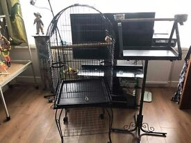 Bird cage and pirch