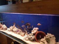 6ft Aquarium