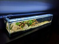 Custom Long Aquarium Complete Set-Up