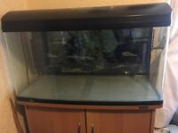 fish tank MUST GO THIS WEEKEND