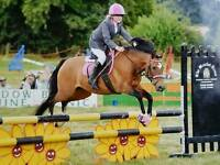 13 1/ 13 2hh jumping pony