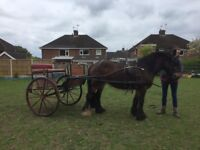 Pony for part Loan to stay at present home 14.2hh