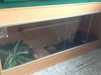 Leopard Gecko x3 and viv set up