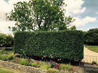 Gardener, Horsham area, £17ph