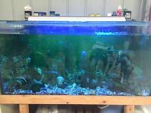 450ltr FISH AQUARIUM TANK (Complete with everything) Grantville Bass Coast Preview