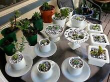POTTED  PLANTS  FOR  GIFTS Woodrising Lake Macquarie Area Preview