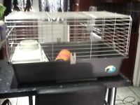 Indoor ,outdoor, Guinea pig or small rabbit cage