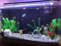 Large 130L fish tank for sale with everything except fish, includes table. Huge bundle ready to go.