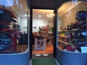 Doggy Chu $55,000 Sandgate Newcastle Area Preview