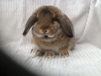 Male rabbit for rehoming
