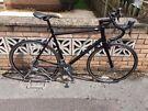 Pinnacle Road Bicycle (Bike)