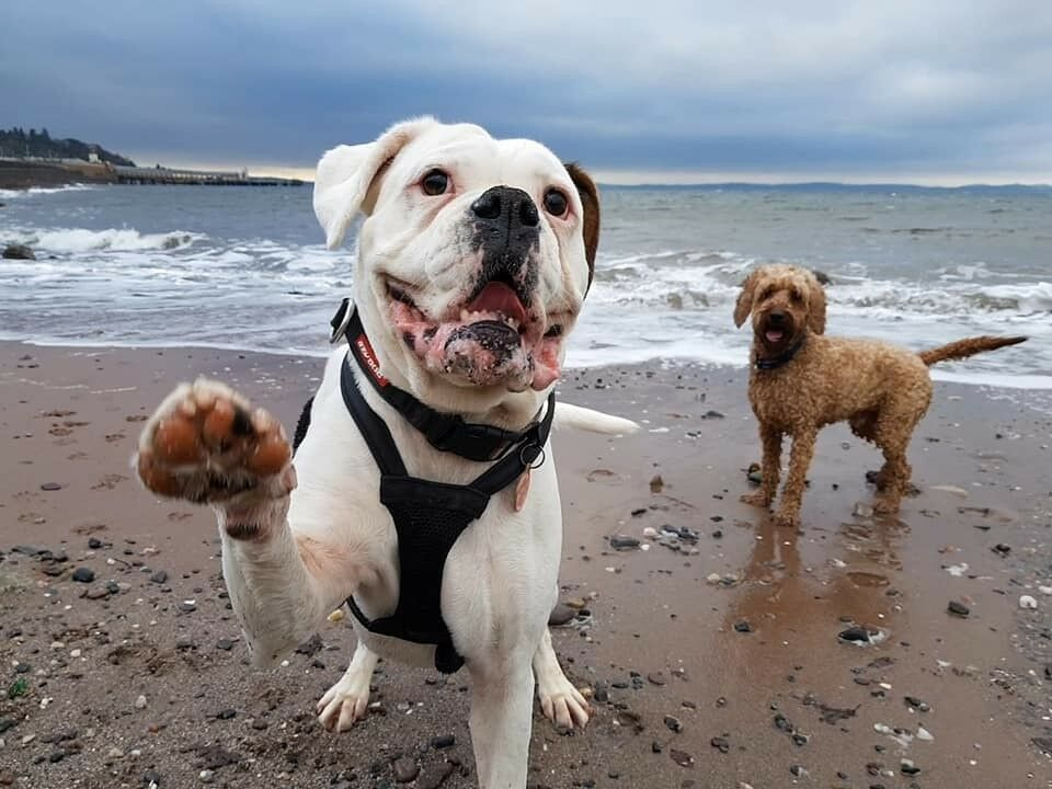 Tell Me a Tail Pet Sitting and Dog Walking (Licensed/Insured Pet Sitter/Dog  Walker in Inverclyde)   in Greenock, Inverclyde   Gumtree