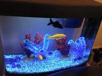 FOR SALE, Panorama Aquarium and smaller glass aquarium