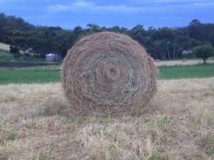 Grass Hay bales Claremont Glenorchy Area Preview